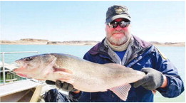 Annual Spring Walleye Spawn  Underway At Fort Peck Lake
