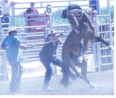 Poplar Rodeo